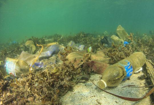 Plastikmüll im Meer (c) Adobe Stock