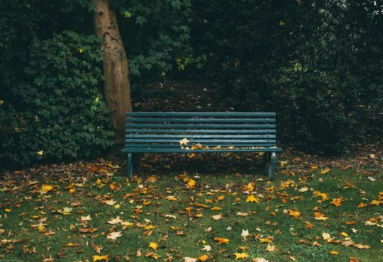 Beispielbild Park (Foto: Will Paterson)